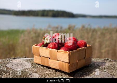Las fresas en una pequeña cesta de madera sobre roca