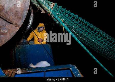 Pescador trabaja para el malacate dragger net sobre la pesca de arrastre. Banco Stellwagen, Nueva Inglaterra, los Estados Unidos, el norte del Océano Atlántico