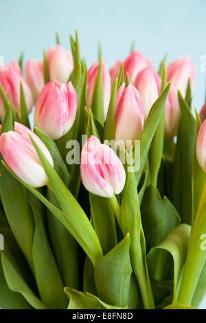Cerca de tulipanes rosados y blancos