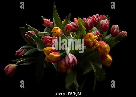 Ramo de tulipanes, Foto de estudio