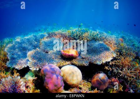 Arrecifes de coral submarinos