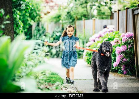 Perro de raza mixta chica caminando en la acera suburbana