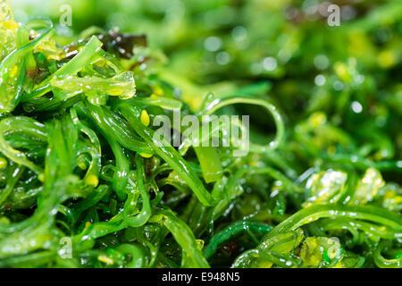 Ensalada de algas (detallada primerísimos) para utilizar como imagen de fondo o como textura