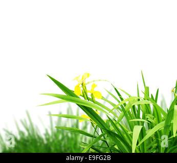 La pasto verde con un fondo blanco.