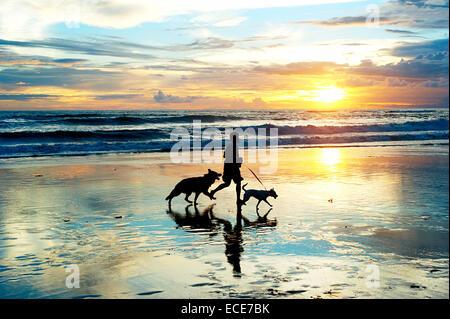 Hombre con un perro corriendo por la playa al atardecer. La isla de Bali, Indonesia Foto de stock