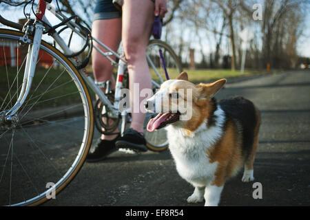 Mujer en bicicleta con su perro Pembroke Welsh Corgi