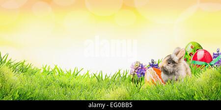 Fondo de Pascua con conejo, huevos y flores sobre la hierba y el cielo soleado con bokeh, banner para la página web