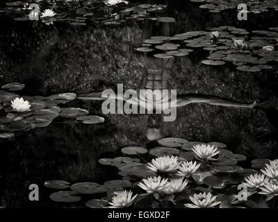 Ninfas en un estanque con el reflejo de la escultura. Oregon