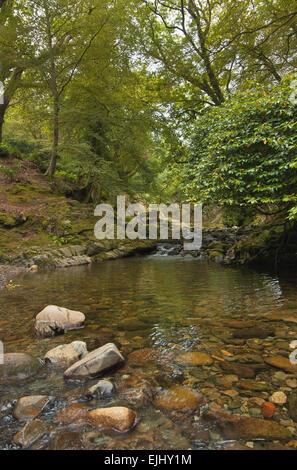 Una vista escénica en Tollymore Park, Irlanda del Norte Foto de stock