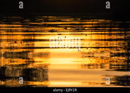 Vista de un color anaranjado fuego atardecer reflejándose en un río en el bosque lluvioso del Amazonas cerca de Iquitos, Perú
