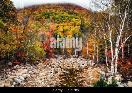 Ángulo de visión baja de una montaña en la Niebla y un arroyo seco en otoño, White Mountains National Forest, Nueva Foto de stock