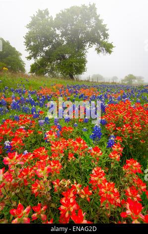 Pincel y bluebonnets en el Texas Hill Country, cerca de Fredericksburg, Texas