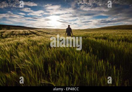 Vista trasera de un hombre de pie en un campo verde al atardecer