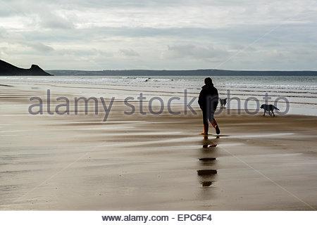 Perro Newgale Walker en la playa de Pembrokeshire (Gales, Reino Unido