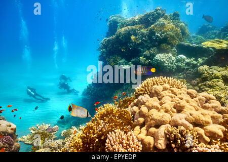 Mar Rojo - vista submarina a submarinistas y el arrecife, Marsa Alam, Egipto