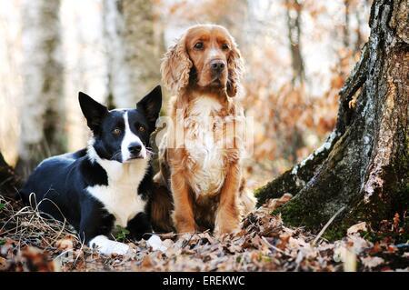 2 perros