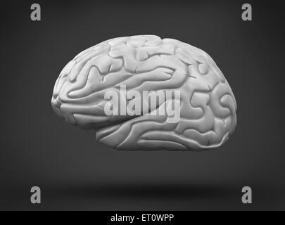 Cerebro Humano sobre fondo negro
