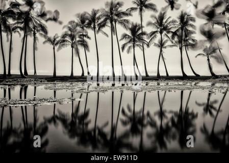 Estanque reflejando las palmeras. Playa de arena negra. Hawai, la Isla Grande