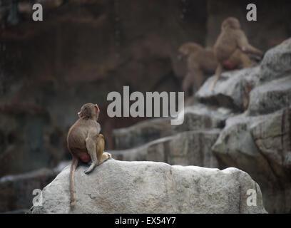 Mono bebé de babuino Hamadryas sentado en una triste y solitaria plantean
