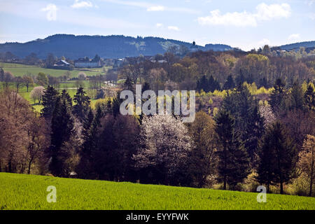 Paisaje de montaña cercano Affeln baja en primavera, en Alemania, en Renania del Norte-Westfalia, Sauerland, Neuenrade
