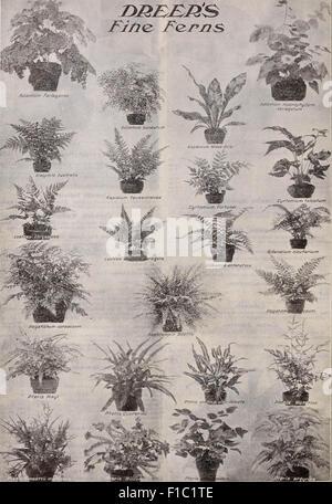 Lista de precios al por mayor del Dreer : semillas para floristerías Plantas semillas, herramientas, fertilizantes, artículos diversos, etc.