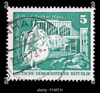 Sello impreso en Alemania muestra pelícano blanco oriental y Alfred Brehm House, el Tierpark, Berlín, circa 1973.