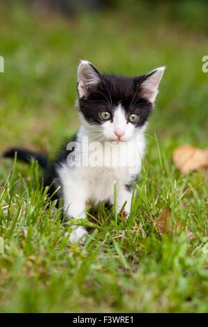 Jóvenes de gato en el jardín
