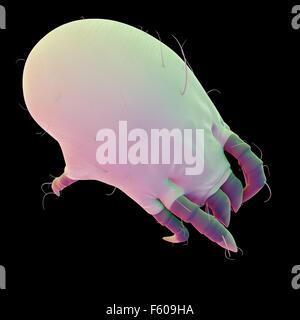 Ilustración médica precisa de un ácaro del polvo común Foto de stock