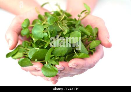 Mujer manos ofreciendo los berros.Alimentos textura de fondo y concepto. Fuentes alimenticias