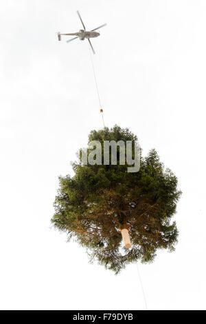 Lugano, Suiza - 20 de noviembre de 2015: helicóptero lleva un árbol de navidad