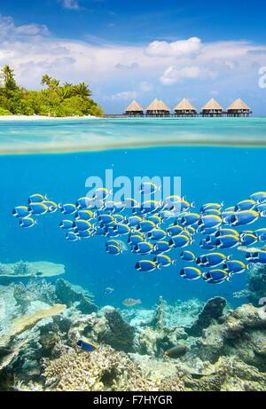 Maldivas - Isla tropical con vista submarina cardumen de peces