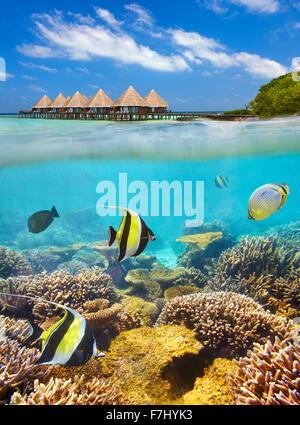 Paisaje tropical en las Islas Maldivas, el Atolón Ari