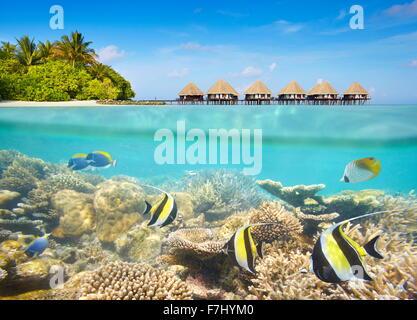 Paisaje subacuático tropical en la isla Maledives