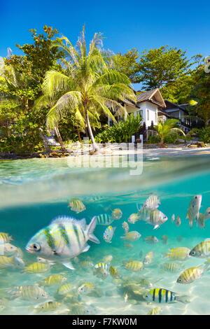 El paisaje tropical de la isla de Ko Samet submarina con vista al mar con peces, Tailandia, Asia
