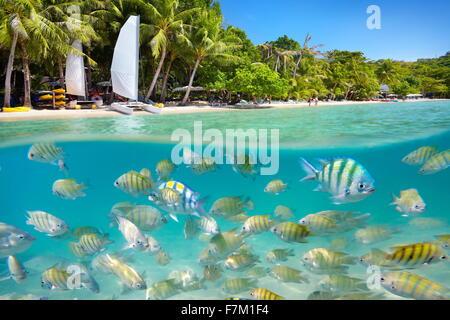 Tailandia - playa tropical y vista mar submarino con peces en Ko Samet Island, Tailandia, Asia