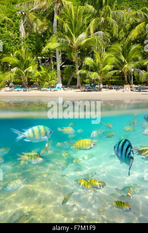 Tailandia - vista mar submarino tropical con peces en Ko Samet Island Beach, Tailandia, Asia