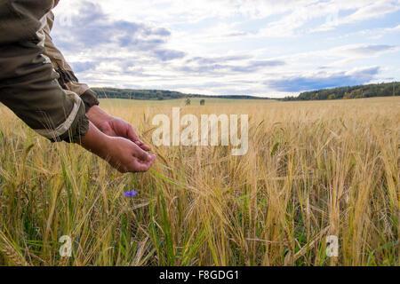 Brazos de Mari hombre examinar plantas en ámbito rural