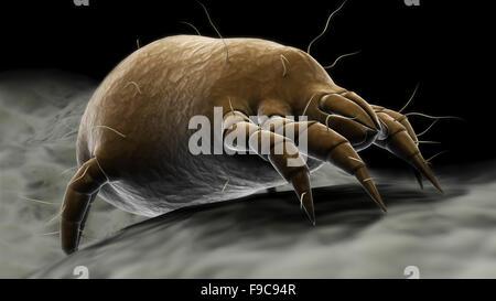 Visualización microscópica de un ácaro del polvo. Foto de stock