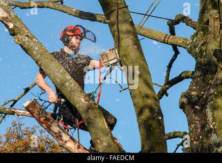 Cirujano de árbol en la parte superior de un árbol, cortar las ramas con una motosierra. Molida y desenfoque de movimiento