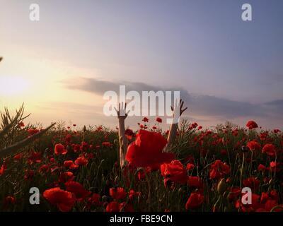 Brazos levantados de la persona en el campo de Flores de amapola roja contra el cielo