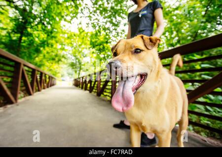 Mujer caucásica paseando a un perro en el puente