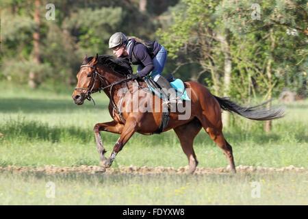 Neuenhagen, Alemania, el jinete y su caballo durante una mañana entrenando en el Boll Ensdorfer