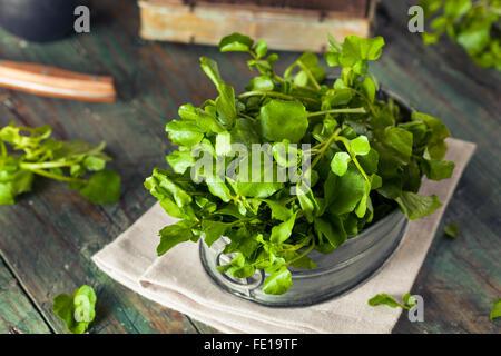 Materias orgánicas berros verde LISTO PARA USAR