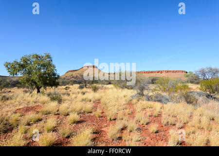 Bush cerca de Alice Springs, el Territorio del Norte, Australia Foto de stock