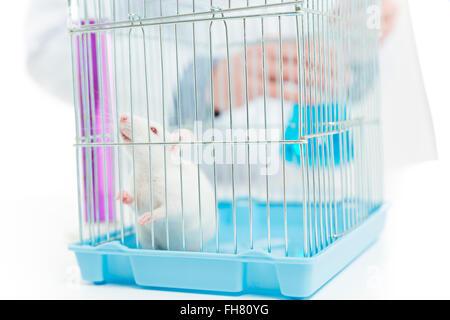 Closeup retrato de una rata del laboratorio químico