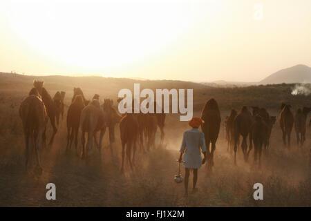Atardecer en Pushkar mela - Pushkar camel fair - festival en Rajasthan, India