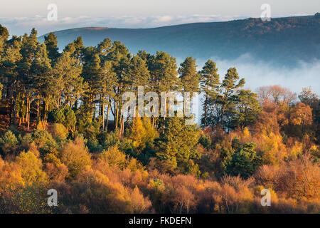 Colores de otoño nr Webber Post, Exmoor National Park, Somerset, Inglaterra, Reino Unido. Foto de stock