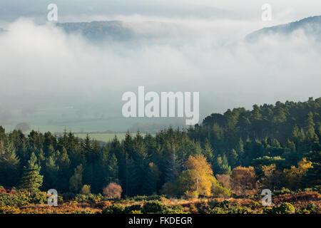 Colores de otoño nr Webber Post, con la niebla que pende sobre la Holnicote Estate, Exmoor National Park, Somerset, Foto de stock