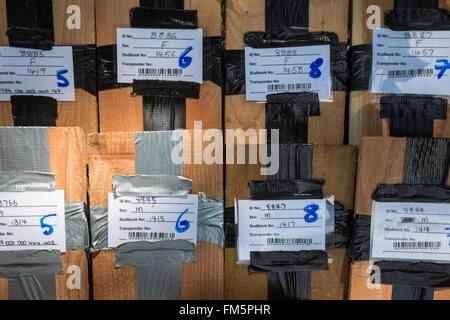 Común (avellano) lirón (Muscardinus avellanarius) nestboxes, utilizados en proyecto de reintroducción, Nottinghamshire, REINO UNIDO Foto de stock