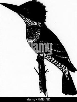 Clave para las aves de América del Norte (microforma) - que contiene una reseña concisa de cada una de las especies de aves que viven y fósiles en la actualidad conoce desde el continente al norte de la frontera de México y de los Estados Unidos,